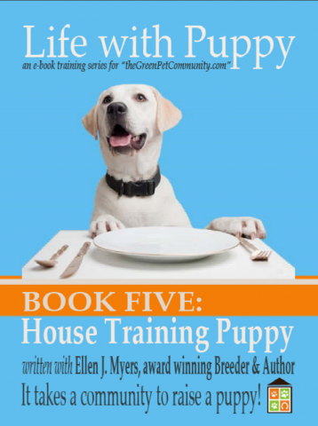 how to potty train your puppy training to a litter box